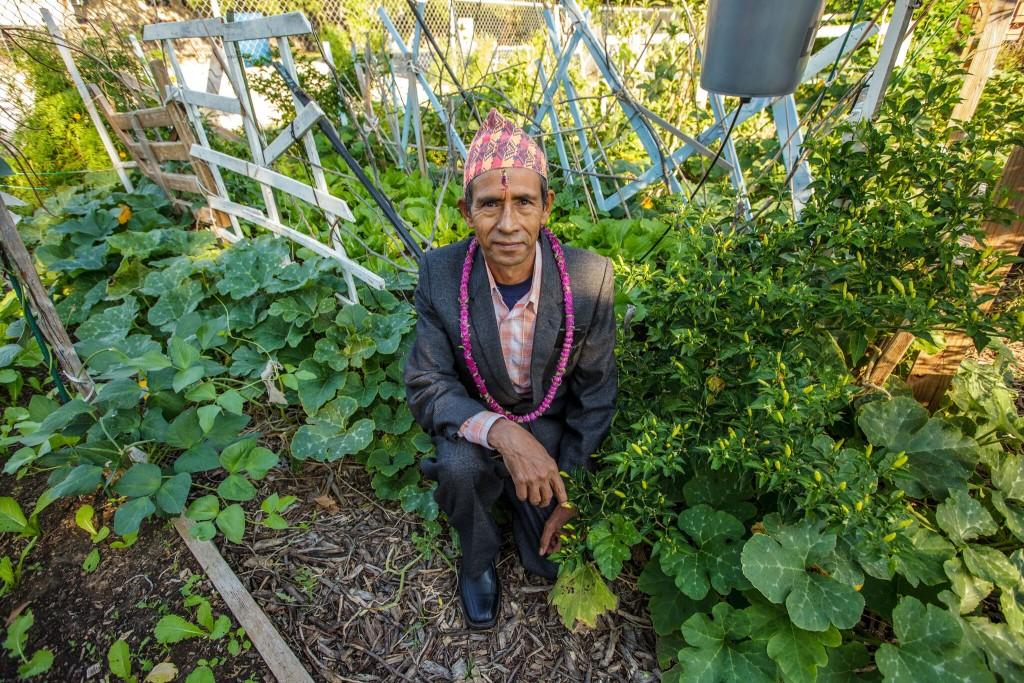 Local gardener tends his plot at Vickery Meadow Community Garden