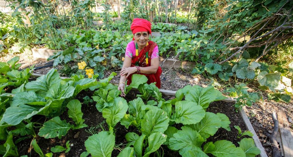 Gardener in Dallas, TX shows off her thriving plot