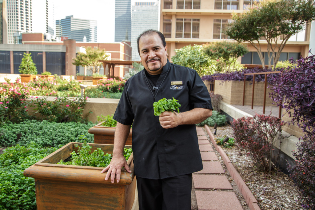 Fairmont Dallas Hotel rooftop garden provides fresh food for guests