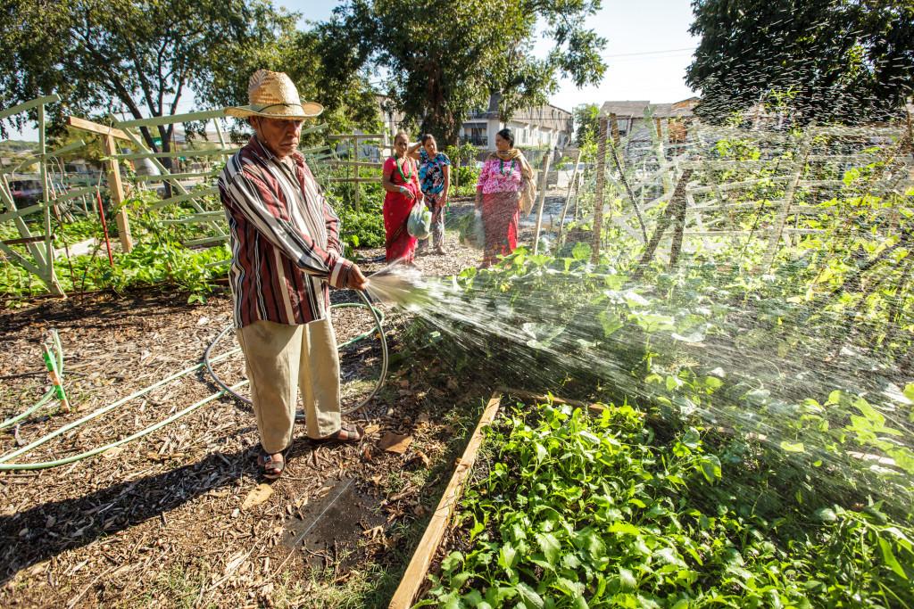 Urban garden in Dallas receives good soaking