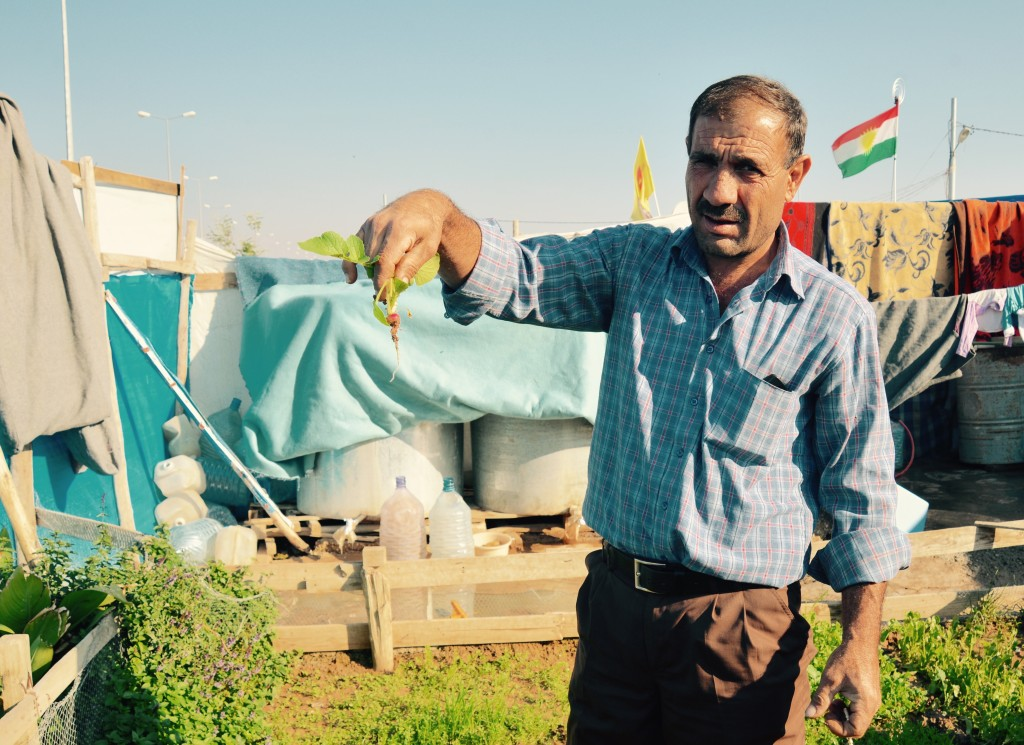 Gardener in Domiz camp, Iraq, shows what his garden grows