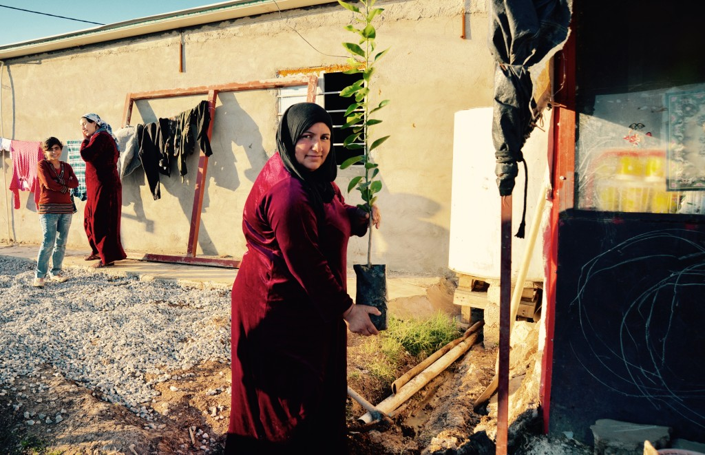 Planting lemon trees at Domiz camp, Iraq