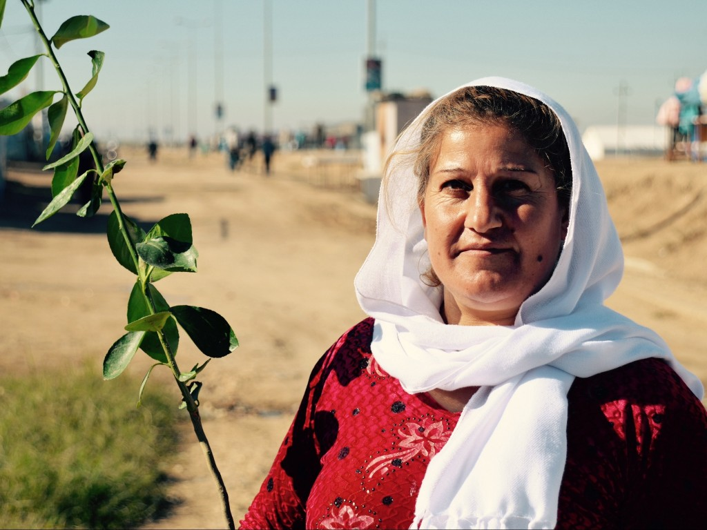 Collecting lemon trees at Domiz camp, Iraq