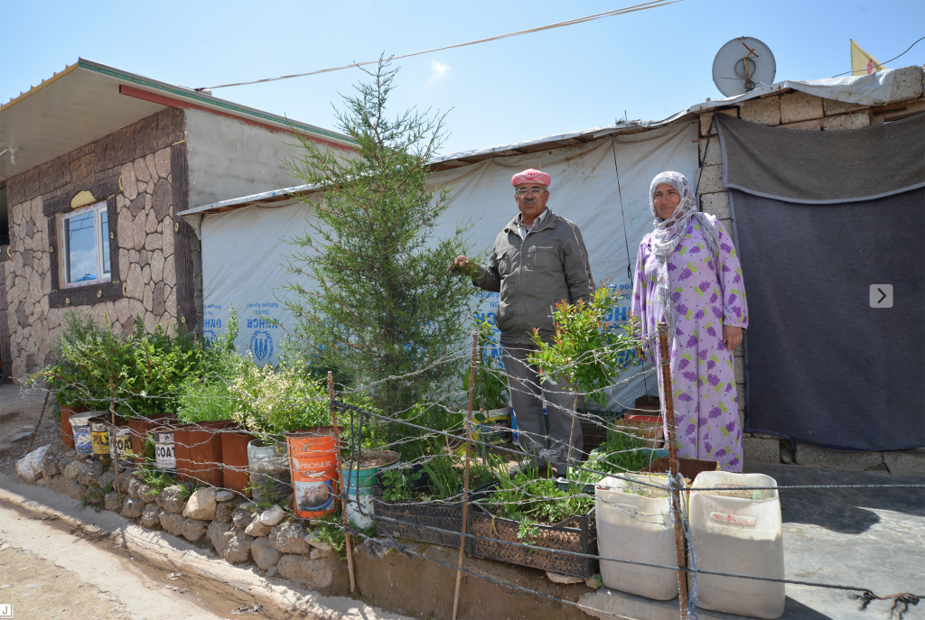 Gardeners in Domiz camp, Iraq tend their street-side garden